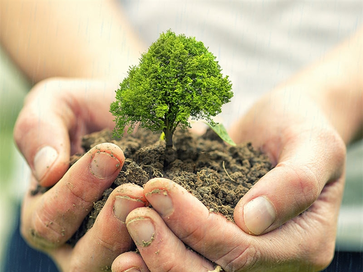 Image result for tree planting images