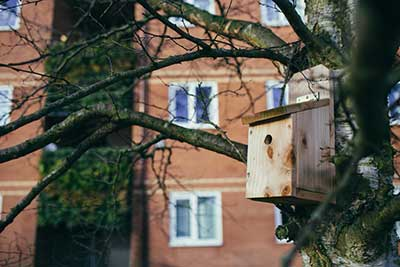 Policy and Progress - sustainability image - photo of bird house in tree on the vale